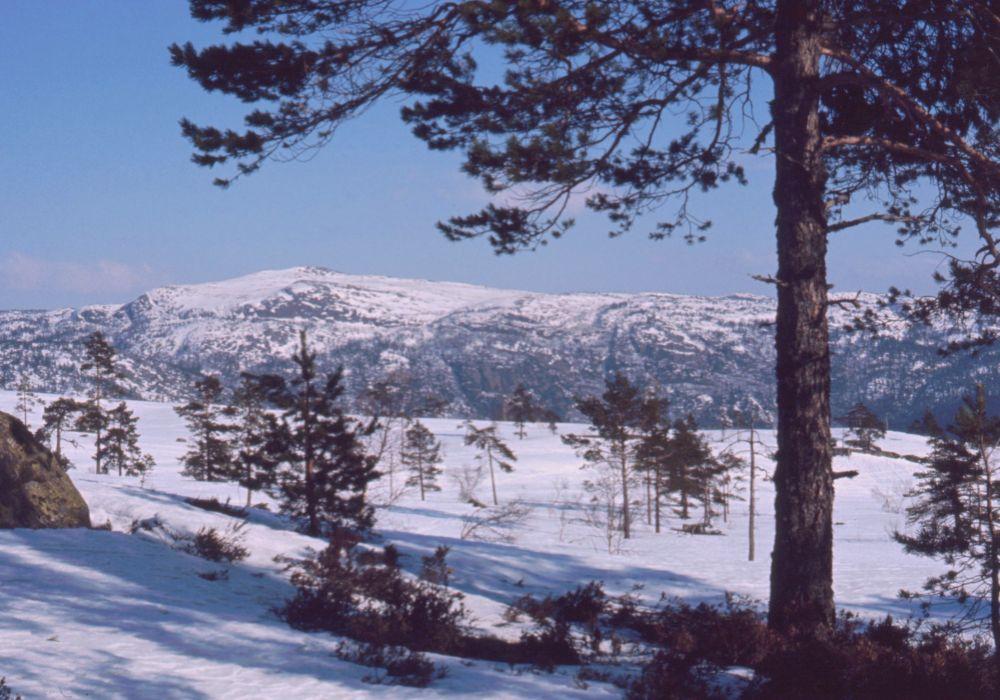 Norgestur 1974 - Eiken