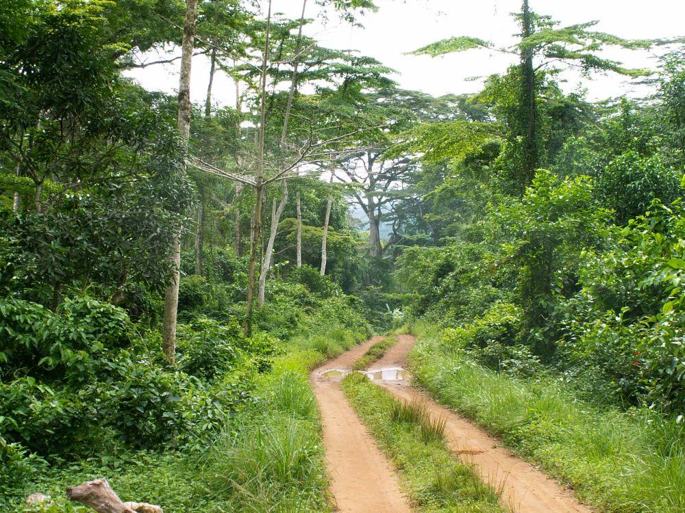 Gennem jungleagtig skov