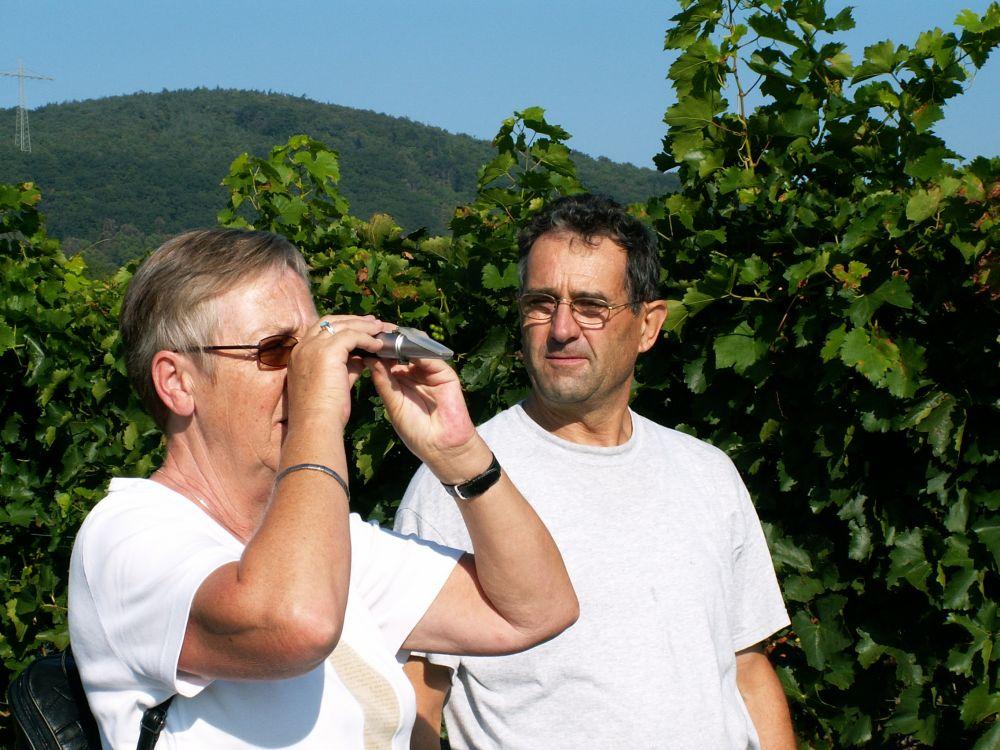 Aase måler sødme på Dornfelderdruer