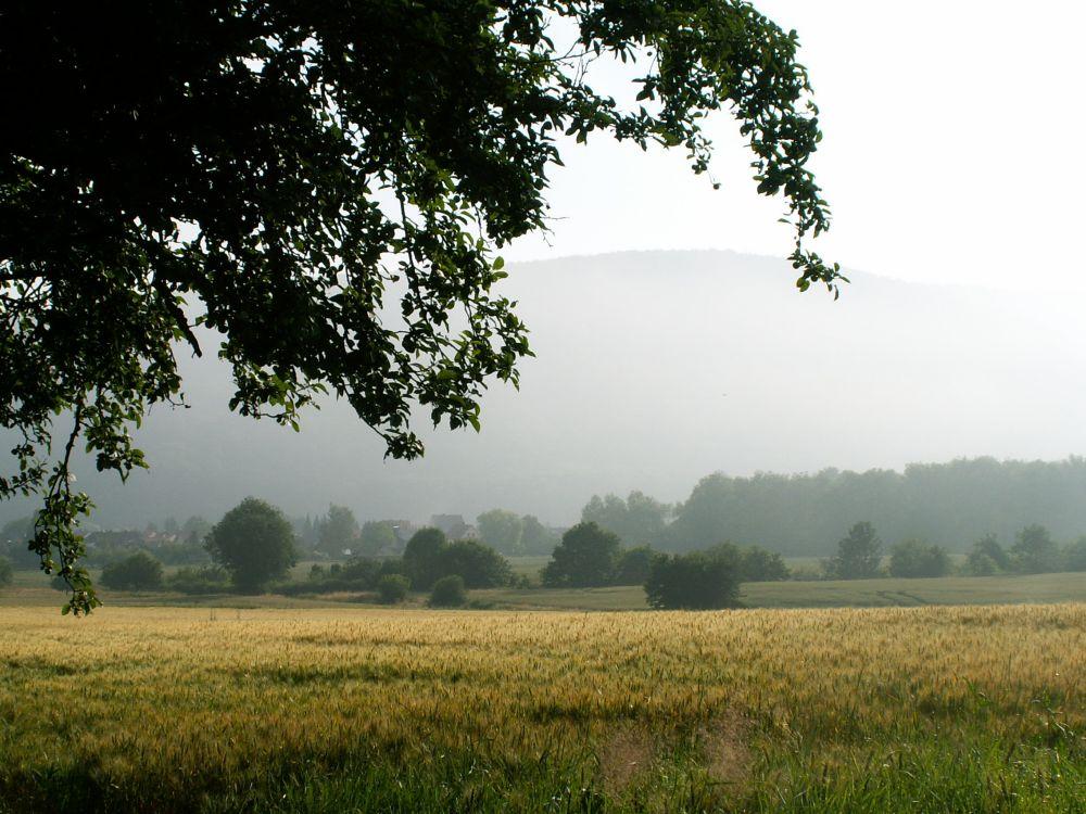 Morgen ved Reinhardshagen Weserdalen