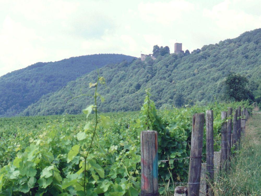 Burg Landeck i Rheinpfalz