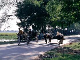 1998-BGL268 Richshaw og oksekærre