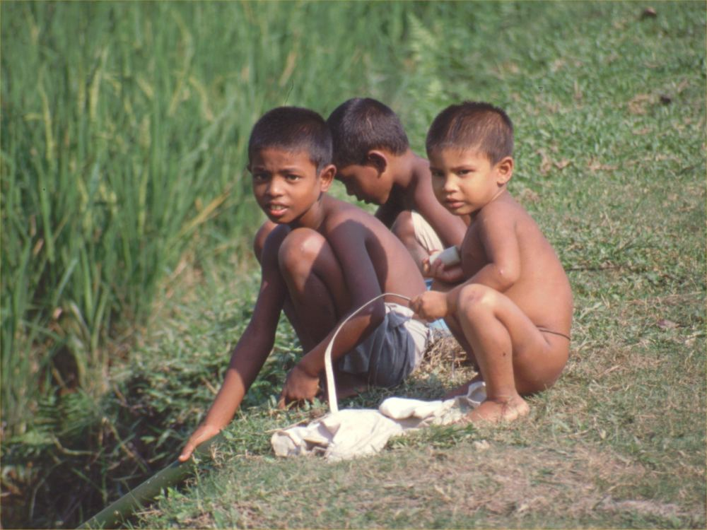 Børn i rismarkerne