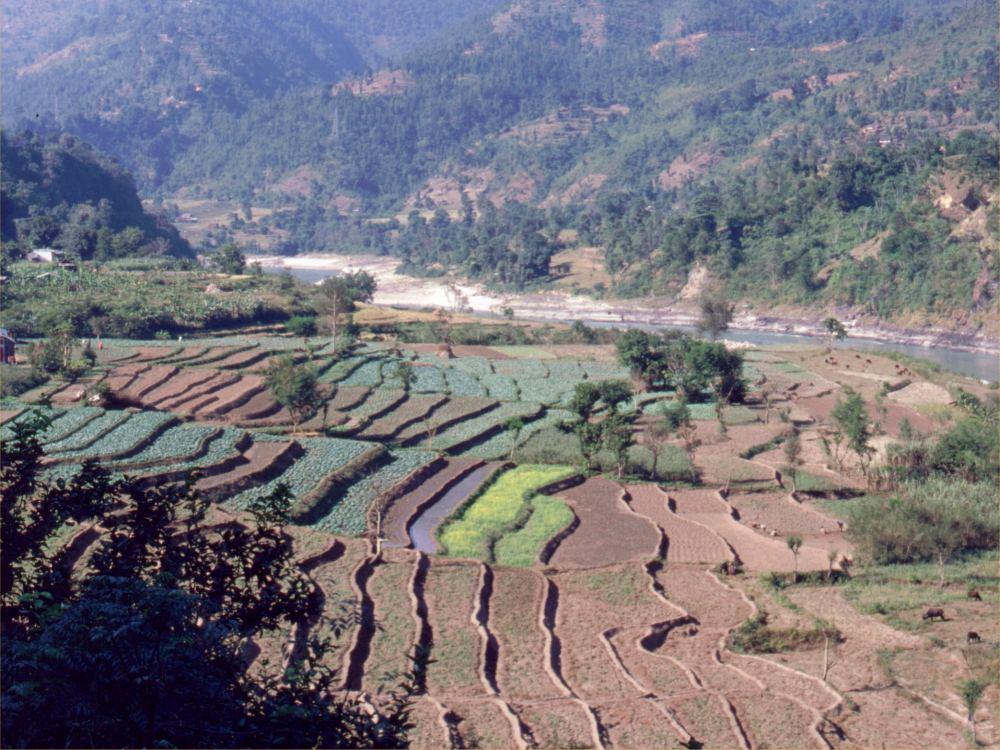 Terrasser i den sydlige del af Nepal