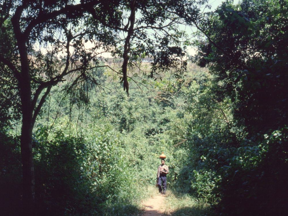 På tur i regnskoven