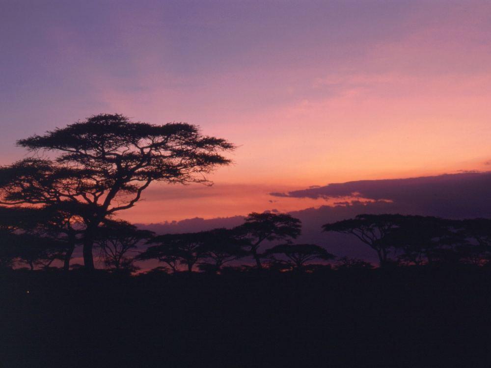 Aften over savannen