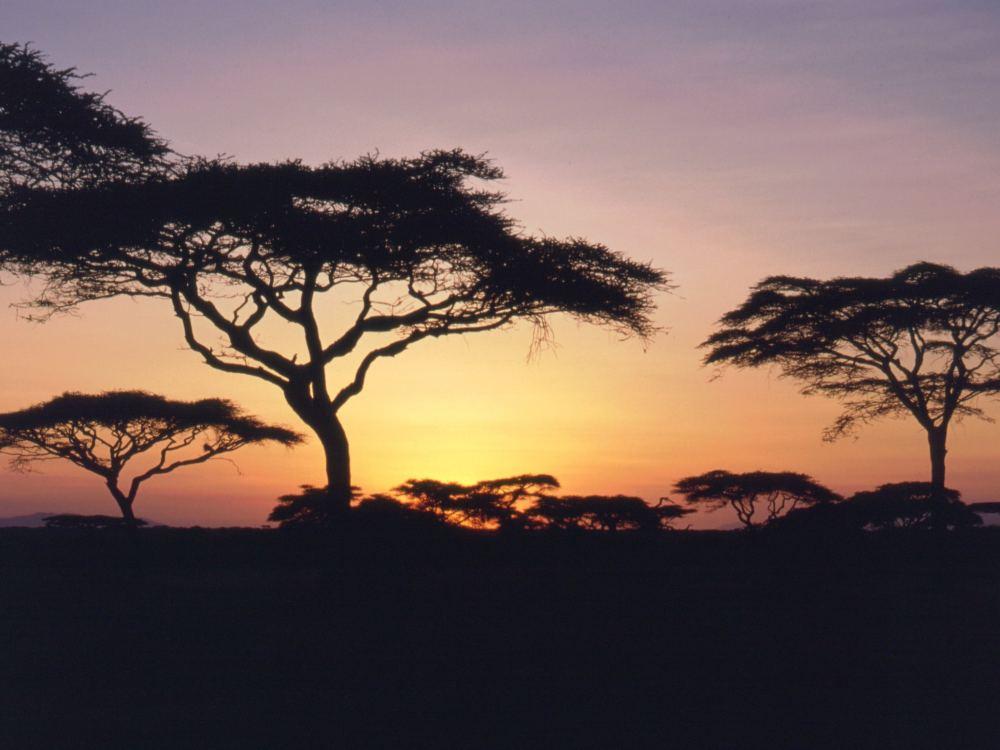 Morgen over savannen