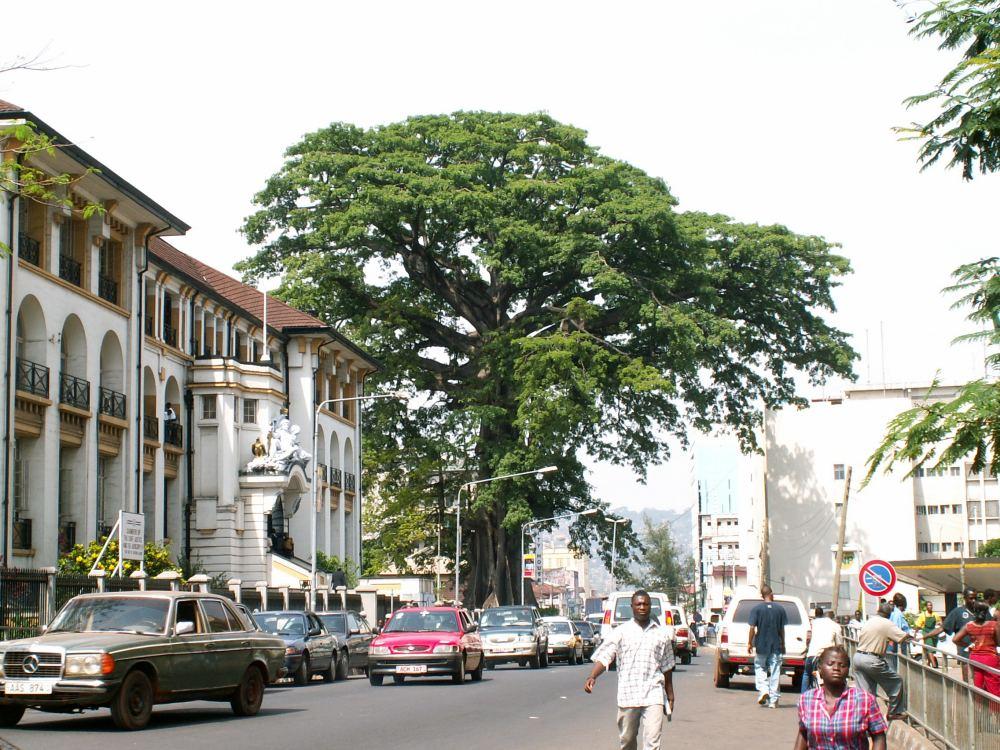 Det store træ i Freetown