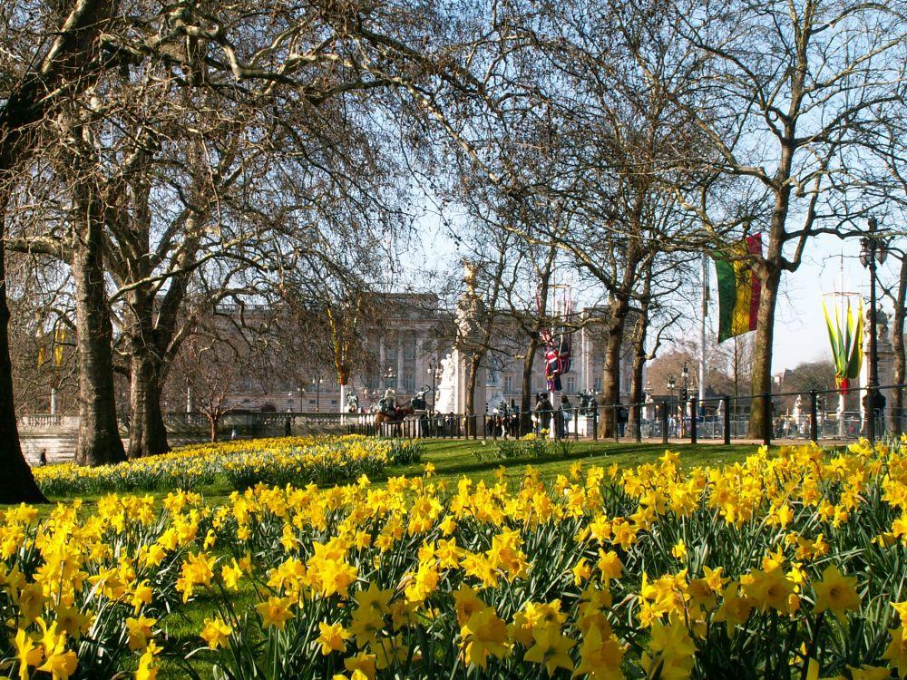 Påskeliljer ved Buckingham Palace