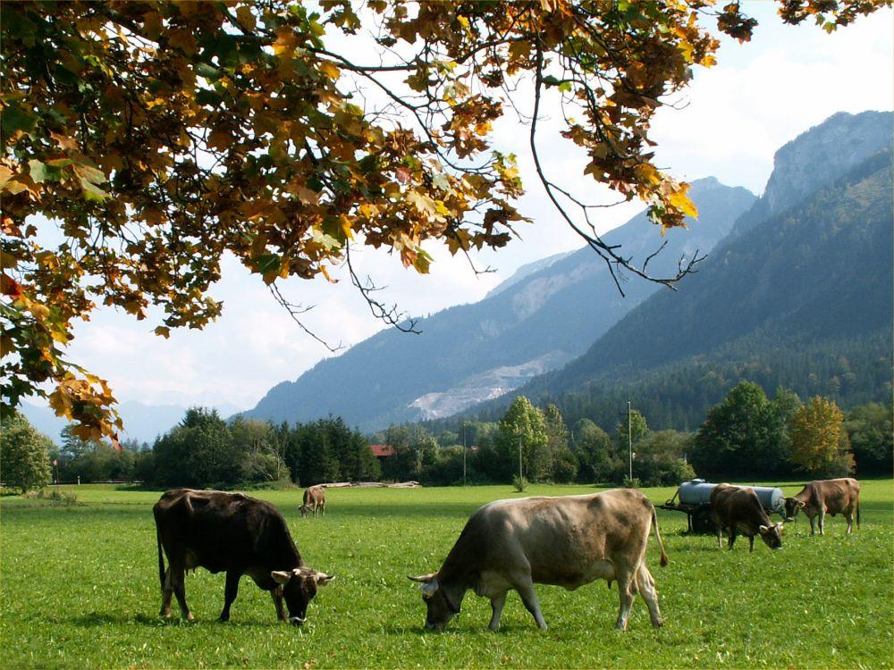Alperne ved Breitenberg