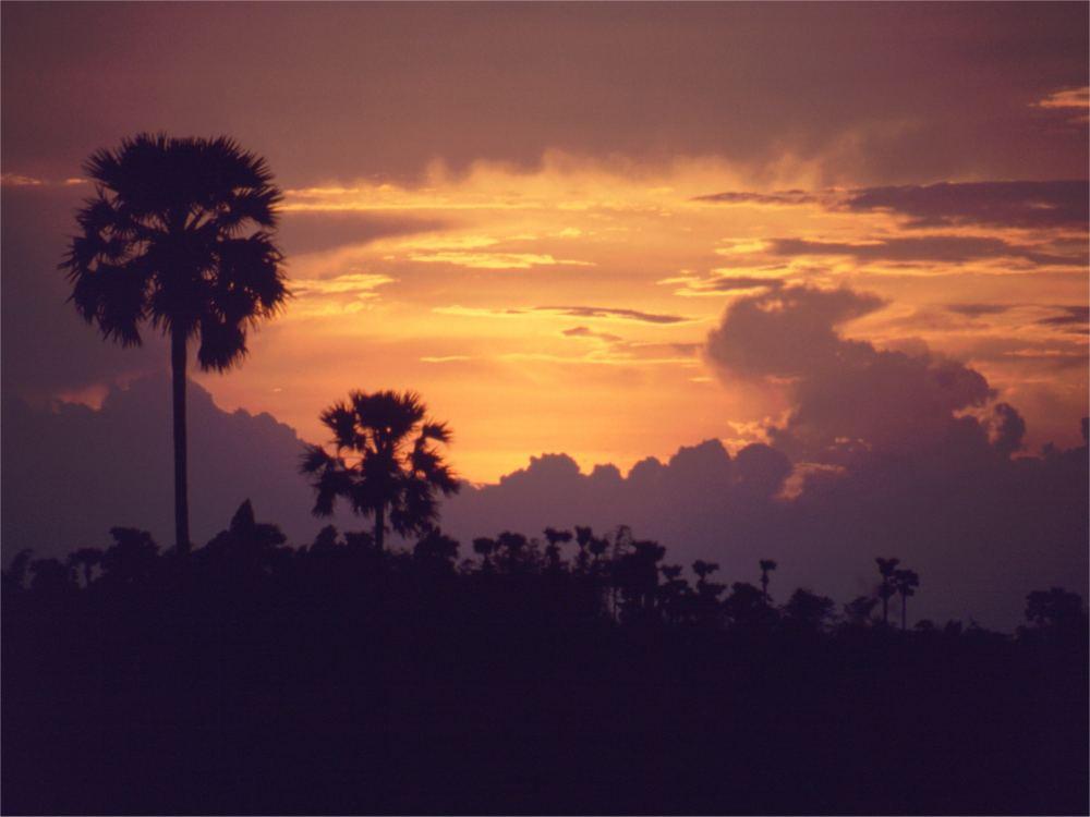 Solnedgang bag sukkerpalmerne
