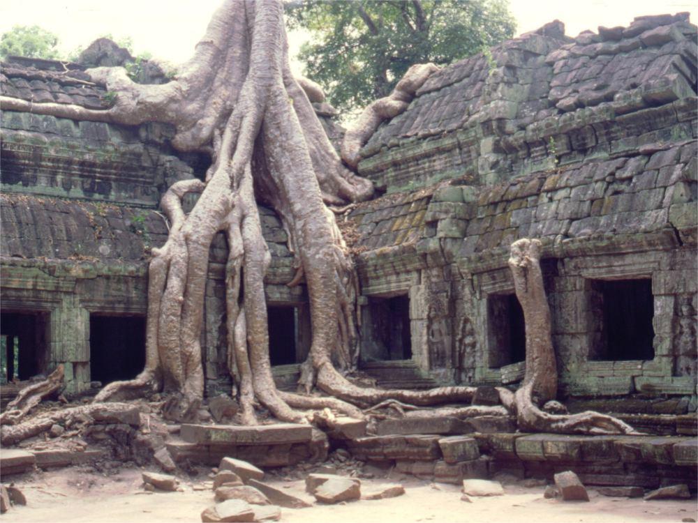 Ta Prohm templet far fået lov at stå som man fandt det i junglen