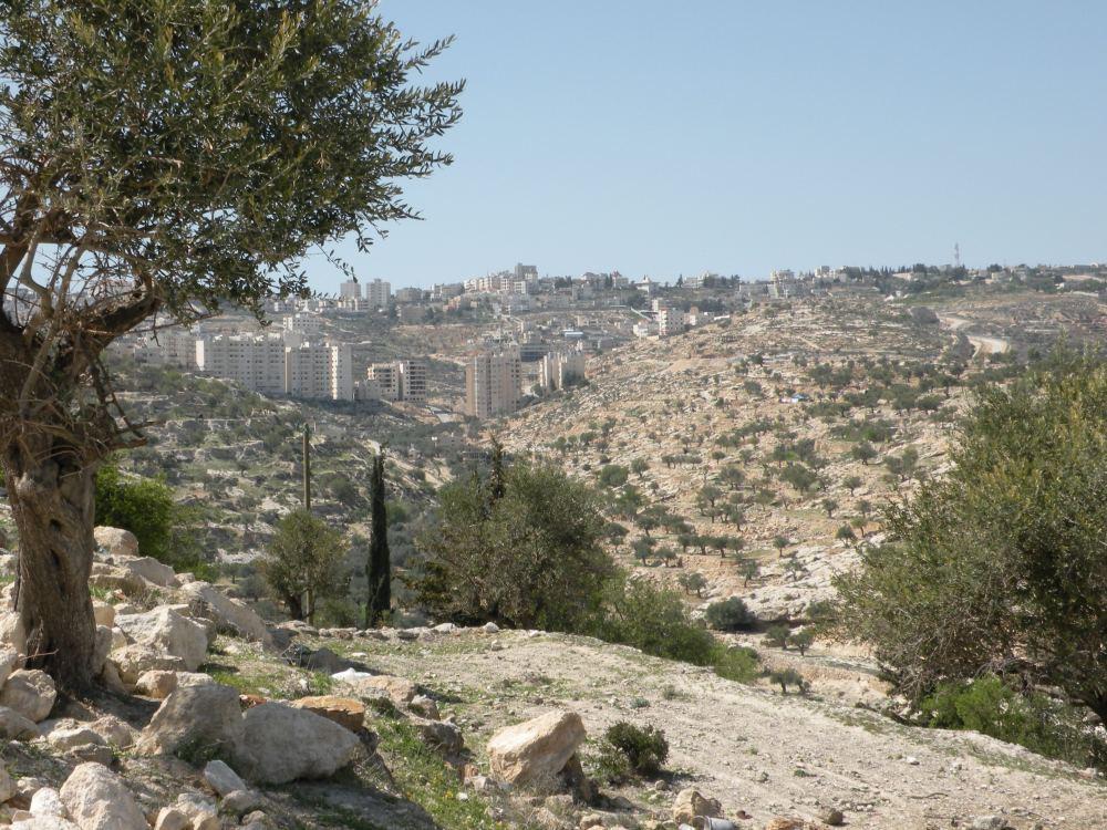 Hyrdernes marker ved Betlehem