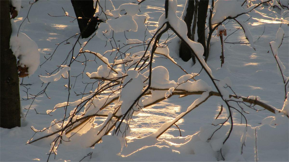 Vinter i Vesterskoven