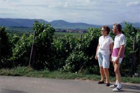 11538 AS-TS i vinmarker i Pfalz