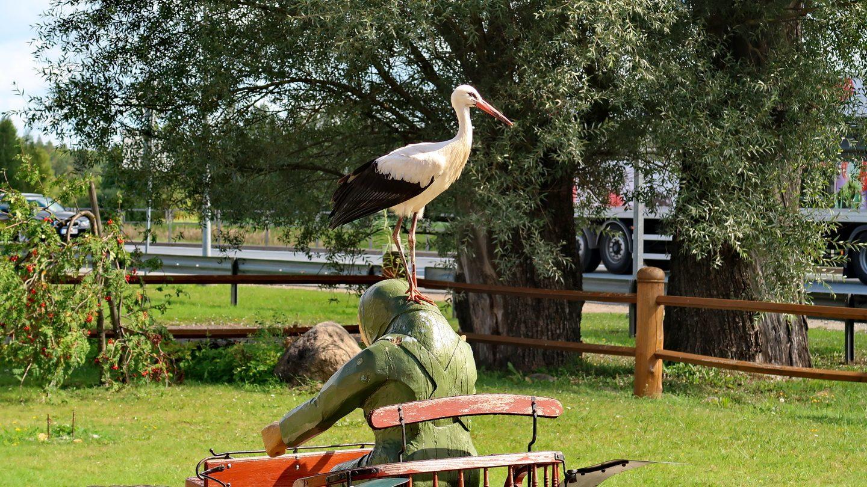 En stork ved den rasteplads, hvor vi spiste frokost