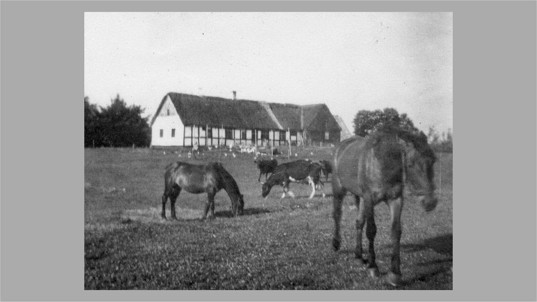 Dalgården fra nordøst 1947