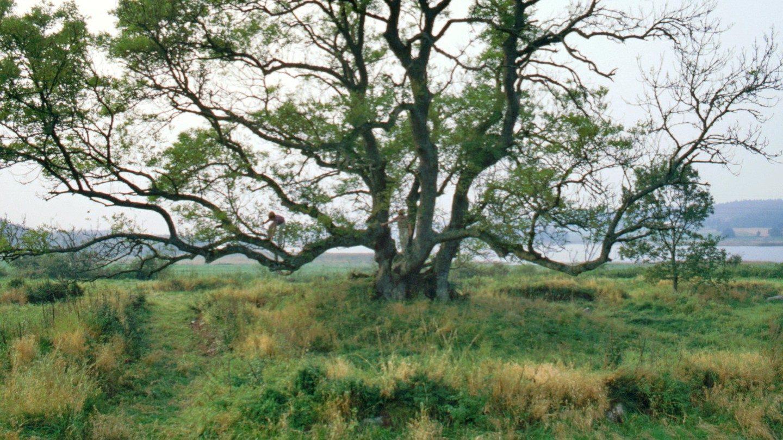 Alling Kloster ruin 1980 med René og Heine klatrende i træet.